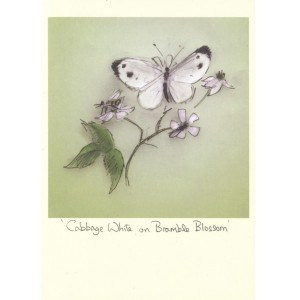 Image of   Greeting Cards Cabbage White